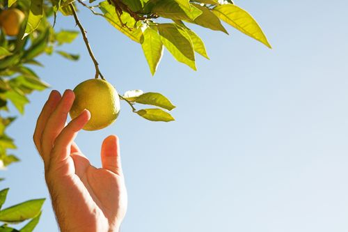 Lemonpic