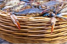Crab bucket photo